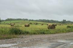 Hay in the Rain Stock Photography