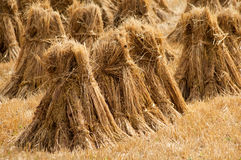 Hay ricks Stock Images