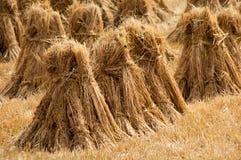 Hay ricks. Traditional hay ricks on Irish farm field Stock Images