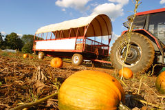 Hay ride on a pumpkin farm. Stock Photos