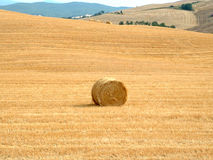 Hay roll Royalty Free Stock Photo