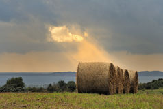 Hay roll. A hay bale in the sun Stock Image