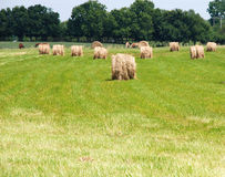Hay Roll Stock Photo