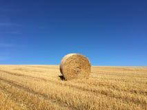 hay roll Стоковая Фотография