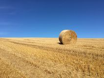 hay roll Стоковое фото RF