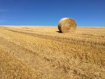 hay roll Стоковая Фотография RF