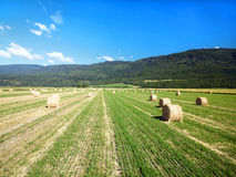 Hay roll on Canadian farms Royalty Free Stock Images