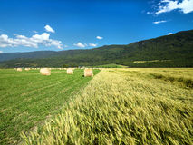 Hay roll on Canadian farms Royalty Free Stock Photography