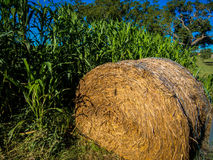 Hay Roll in Corn Field. A hay roll sits besides a corn filed that was turned into a corn maize Stock Image