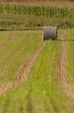 Hay roll far on field Stock Image