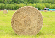 Hay roll Stock Photos