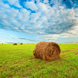 Hay roll on field Stock Image