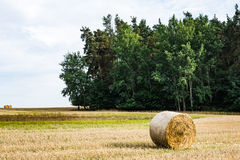 Hay roll in a field Royalty Free Stock Photos