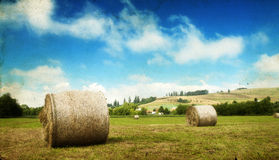 Hay-roll on field after harvest Stock Photos