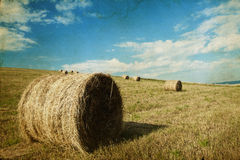 Hay-roll on field after harvest Stock Images