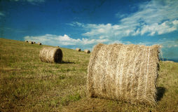 Hay-roll on field after harvest Stock Image