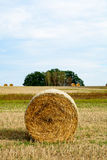 Hay roll in a field II Stock Photography