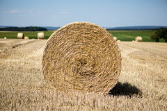 Hay roll field Stock Images