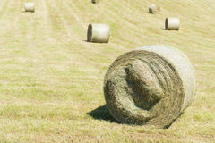 Hay roll in France Stock Photography