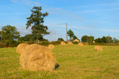 Hay roll in France Royalty Free Stock Photos