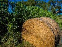 Hay Roll i havrefält Fotografering för Bildbyråer