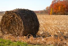 Hay roll in a rural corn field after the harvest Royalty Free Stock Images
