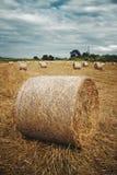 Hay Roll royalty free stock photos