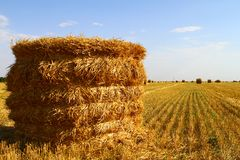 Hay roll on the field at autumn at harvesting time on the blue sky background Royalty Free Stock Images