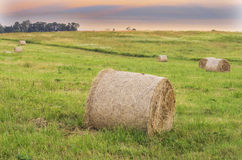 Hay roll Royalty Free Stock Image