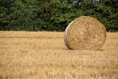 Hay roll during wheat harvest time Stock Image