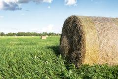 Hay roll Stock Photo