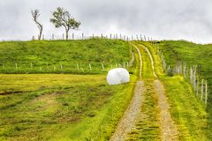 Hay rolled and packaged on a Green Mown grass field. On a summer foggy day. Norway Royalty Free Stock Photo