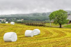 Hay rolled and packaged on a Green Mown grass field. On a summer foggy day. Norway Stock Photography