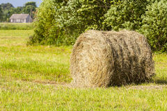 Hay rolled up. Royalty Free Stock Image