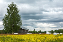 The hay is rolled up on a field of wildflowers. Stock Photos