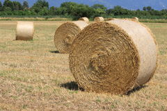 Hay rolles on the field in summertime Royalty Free Stock Images