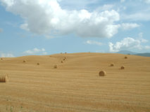 Hay rolls 1 Stock Photo