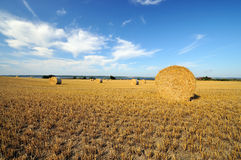 Hay rolls. On a sunny day Royalty Free Stock Image
