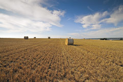 Hay rolls. On a sunny day with clouds Royalty Free Stock Photos