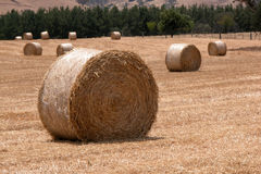 Hay Rolls. In Paddock, Corryong, Victoria, Australia Stock Photos