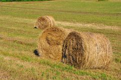 Hay rolls  Royalty Free Stock Photos