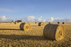 Hay Rolls Stock Photos