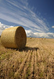 Hay rolls Stock Photography