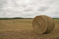 Hay rolls Royalty Free Stock Image