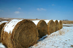 Hay Rolls Stock Photo