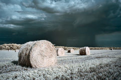 Hay rolls Stock Images
