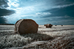 Hay rolls Royalty Free Stock Images
