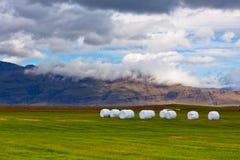 Hay Rolls bianco al campo verde dell'Islanda Fotografie Stock