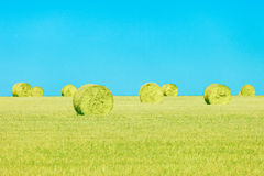 Hay rolls, blue sky and yellow field. Tuscany Stock Image