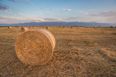Hay Rolls empacotado no por do sol Foto de Stock Royalty Free